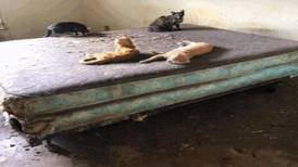 74 cats rescued from Mandarin home in animal hoarding investigation
