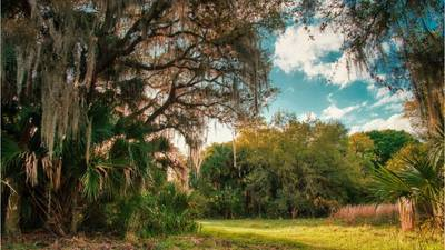 Myakkahatchee Creek Environmental Park: What you need to know