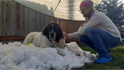 SEE: Dog gets personal snow pile in final days